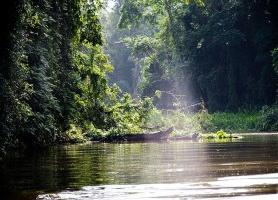 Parc national de Tortuguero : une merveille naturelle