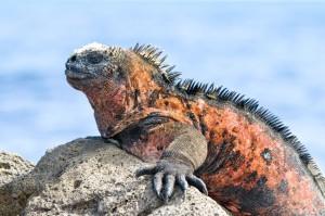 Îles Galapagos: Une faune et une flore exceptionnelles