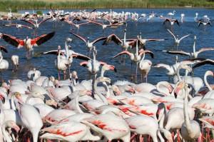 La Camargue : une biodiversité unique au monde