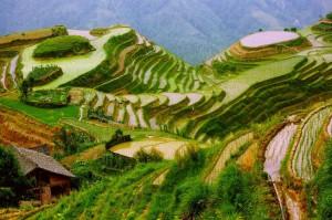Ping'an : Des rizières en terrasse enchanteresses