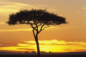 Le Masai Mara : L'Arche de Noé en pleine savane
