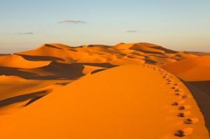 Le Sahara : La perle désertique de l'Afrique
