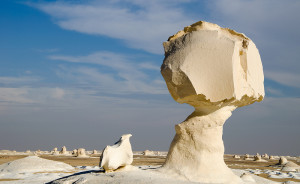 Le désert blanc : une couche de neige sur un désert aride !