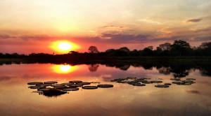 Parc du Pantanal : l'autre biodiversité d'Amérique du Sud