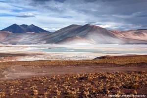 Le salar d'Atacama : l'étendue éblouissante aux cristaux de sel
