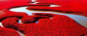La plage rouge de Panjin : un tapis d'herbes couleur écarlate !