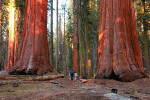 Le parc national de Sequoia : la majesté de la nature