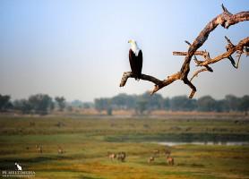 Parc national de Chobe : à la rencontre de 50 000 éléphants