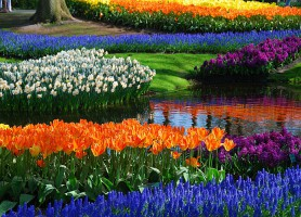 Jardins de Keukenhof: une richesse florale abyssale