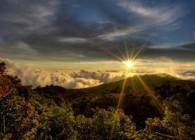 Foret de nuages de Monteverde : la forêt aux espèces rares