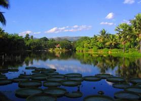 Réserve du Xishuangbanna : un jardin céleste