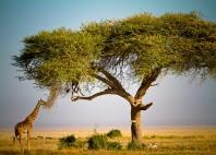 Parc national d'Amboseli
