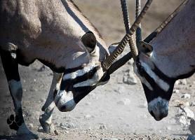 Parc national Hwange : la réserve animalière la plus peuplée du monde
