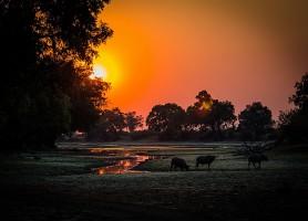 Parc national du sud Luangwa: un site incontournable