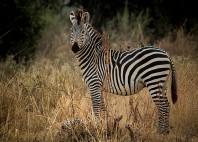 Parc national du sud Luangwa