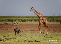 Parc national du lac Manyara
