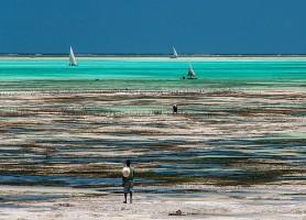 Zanzibar: la perle tanzanienne à explorer
