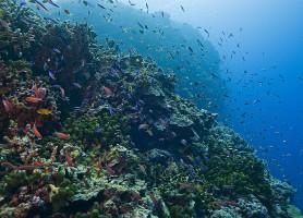 Récif de Tubbataha: un merveilleux spectacle marin