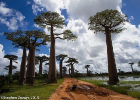Allée des Baobabs : une charmante rue extraordinaire