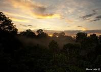 Parc national Yasuni