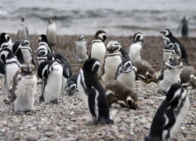 Punta Tombo: plus qu'une réserve, un symbole de beauté