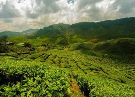Cameron Highlands: découvrez des paysages sublimes