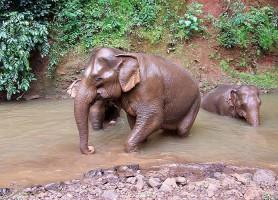 Elephant Valley Project: un vaste projet pour découvrir les éléphants