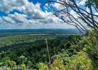 Forêt Iwokrama