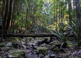 Forêts humides Gondwana: une constellation de merveilles