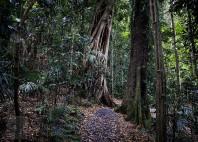 Forêts humides Gondwana