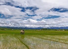 Luang Namtha: un bijou dissimulé dans un trésor