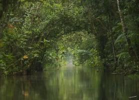 Marais de Kaw: la plus grande réserve naturelle française