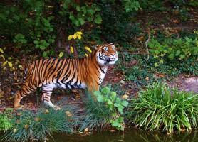Parc national Gunung Leuser: le sympathique refuge de la biodiversité