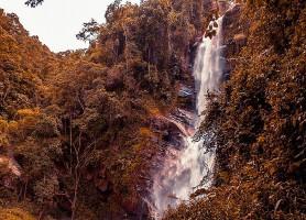 Parc national Henri Pittier: un royaume de l'avifaune