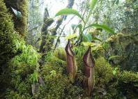 Parc national Kerinci Seblat