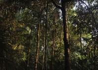 Parc national de Bako