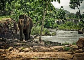Plateau des Bolovens: la plus belle région du Laos