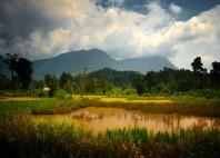 Plateau des Bolovens