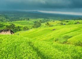 Rizières de Jatiluwih: un site célèbre aux paysages emblématiques