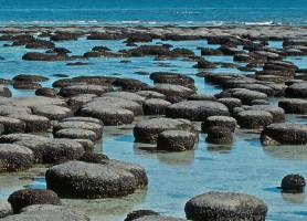 Baie Shark: un splendide paradis marin à votre portée