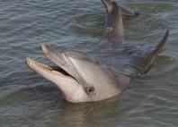 Baie Shark