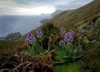 Îles sub-antarctiques de Nouvelle-Zélande