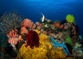 Apo Reef: le majestueux sanctuaire de la biodiversité