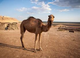 Désert du Kyzylkoum: un magnifique paysage de sable rouge