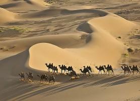 Dunes de Khongor: les fantastiques mamelles de sable