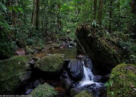 Forêt de Sinharâja: l'éblouissant jardin botanique