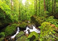 Forêt de Sinharâja