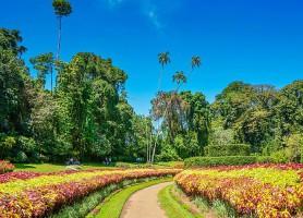 Jardin botanique de Peradeniya: le beau jardin au superlatif