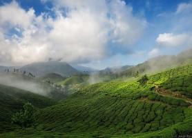 Munnar: découvrez cette époustouflante réserve de thé