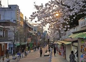 Nara: une petite merveille du Japon à découvrir absolument